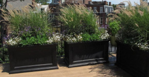 black wooden planter boxes
