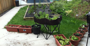 container gardening vegetables and herbs