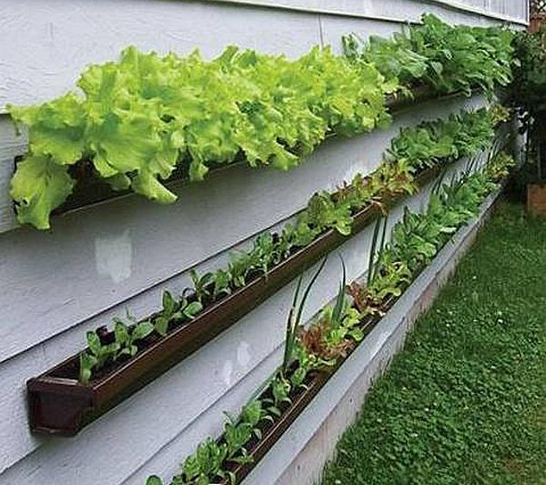 Vegetable Garden Tips And Ideas Part - 43: Container Vegetable Gardening Tips