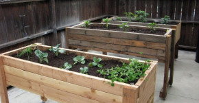 containers to grow vegetables