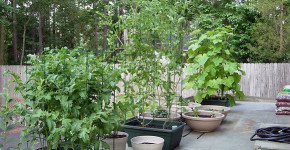 fall container vegetable gardening