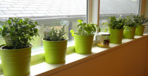 indoor container vegetable gardening