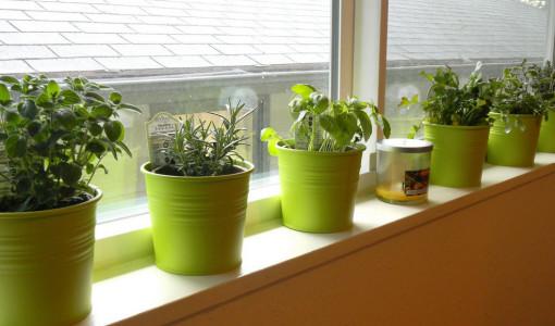 Indoor Container Vegetable Gardening