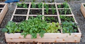 outdoor raised garden box