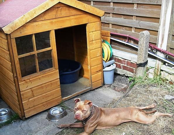 100 dog kennel flooring outside five frugal and simple diy for Home kennel design