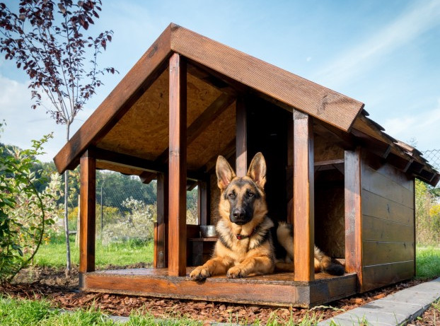 Build your Own Dog Kennel
