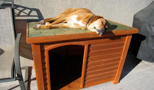 DIY Indoor Dog Kennel 2