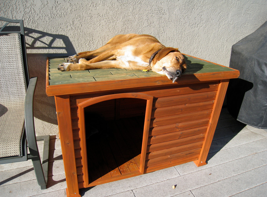 diy indoor dog kennel 2 - Dog Kennel Design Ideas