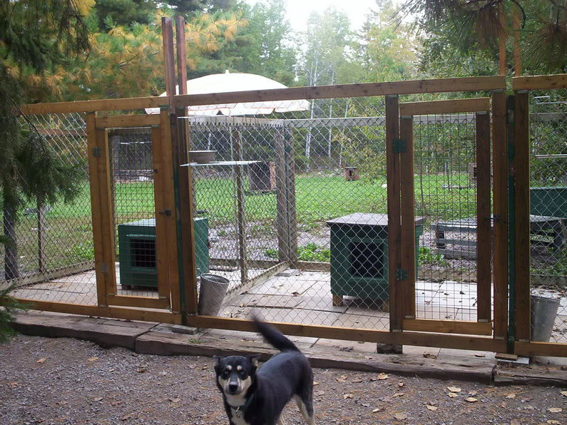 Dog Kennel Flooring Ideas 3