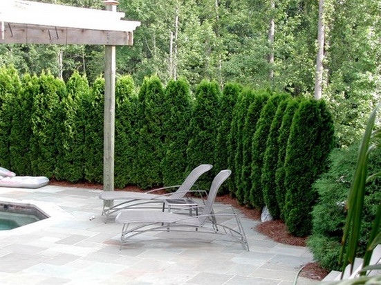 Good Trees for Privacy Screen5