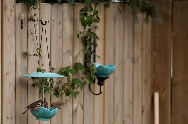 Wall Mounted Bird Bath Tips